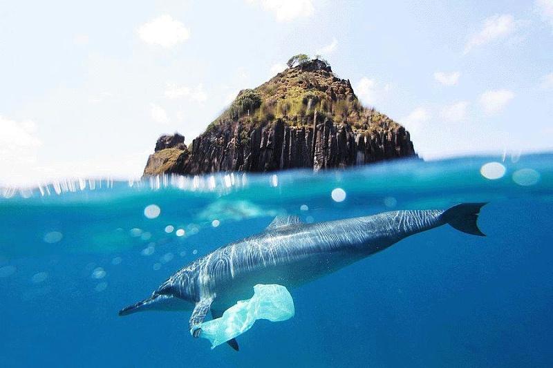 海洋生物被塑料污染